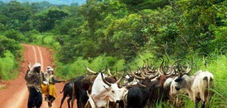 les éleveurs Peuls centrafricains