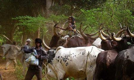 Des éleveurs Mbororo. Photo Teseum