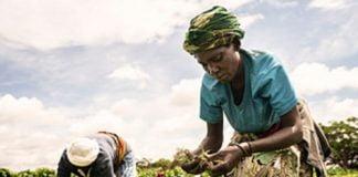 Une alimentation saine ne doit pas être un luxe pour les Africains