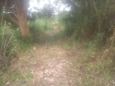 Parcelles délimitées par les généraux des forces armées centrafricaines en toute illégalité dans la commune de Mpoko Ngomon