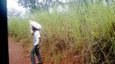 un homme transportant le produit PAM pillé dans un camion au village Gbadéngué proche de Bossangoa